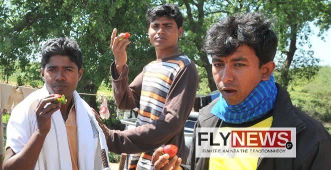 manolada1-flynews
