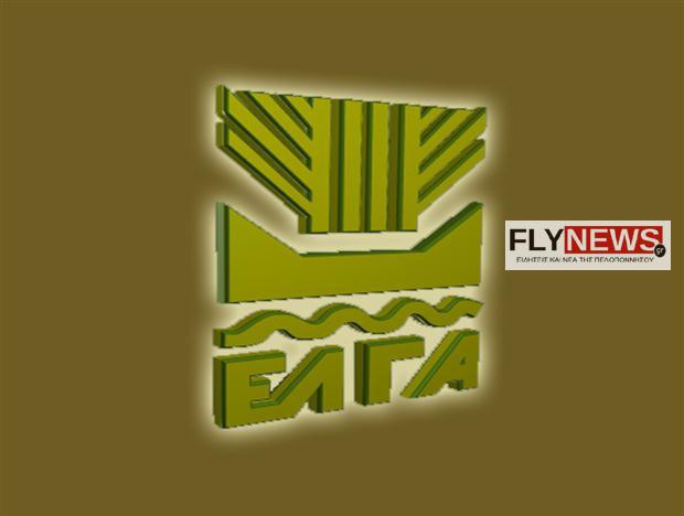 elgafly-flynews